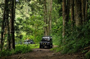 jungle-adventure-outbond